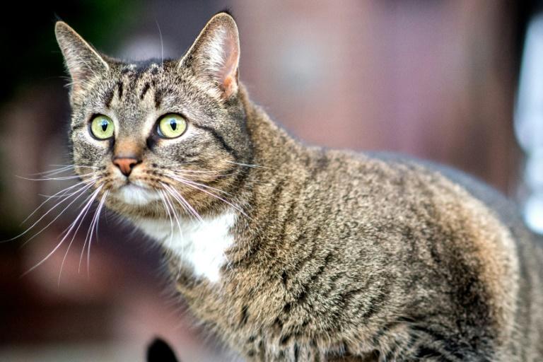 Katze in Rheinland-Pfalz aus Mülltonne gerettet (© 2019 AFP)