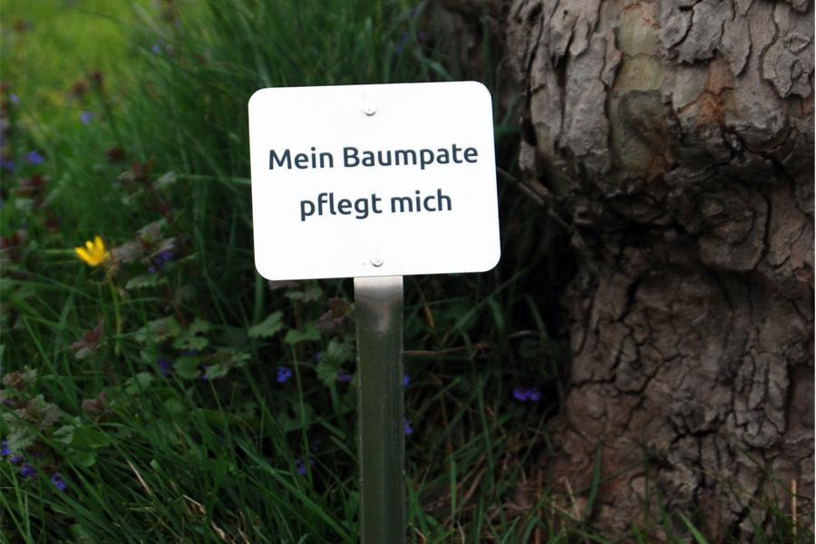 """Das Schild mit der Aufschrift """"Mein Baumpate pflegt mich"""" verhindert versehentliches Abmähen des Aufwuchses an der Baumscheibe (Foto: Stadt Düsseldorf/Gartenamt)"""