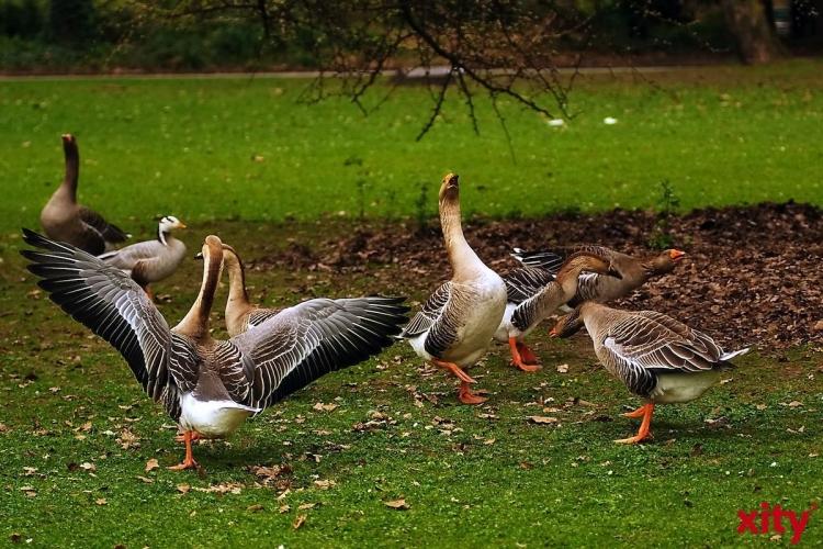 Neue Flyer weisen darauf hin, dass Wildvögel nicht gefüttert werden sollen (Foto: xity)
