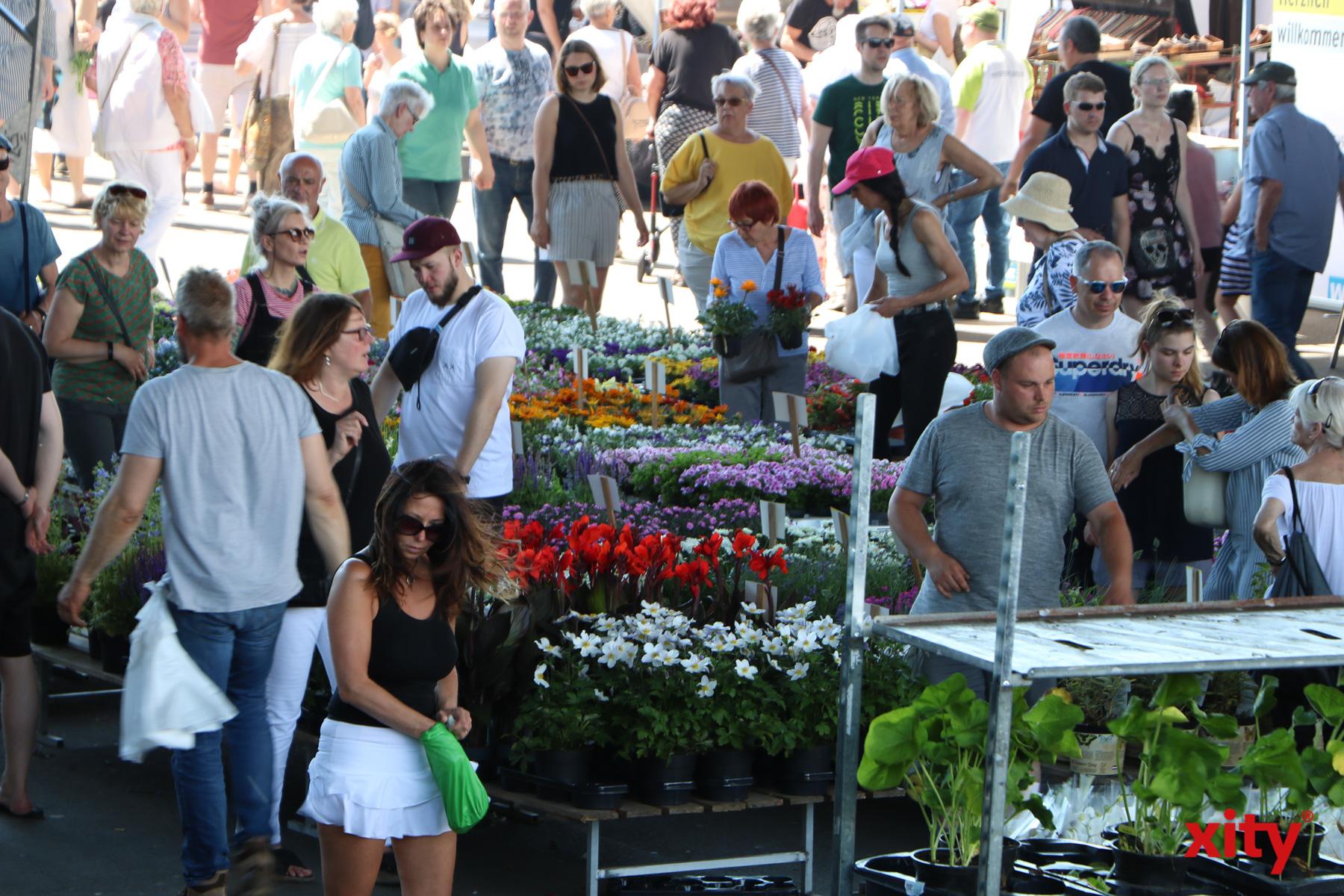 Auch Grünpflanzen wurden angeboten (Foto: xity)
