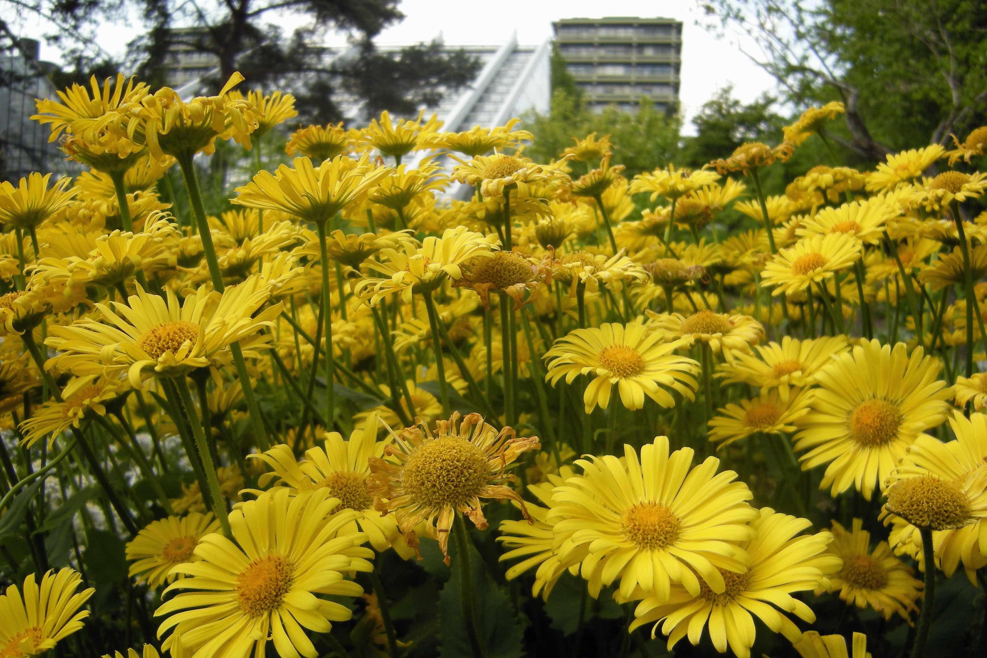 Blumen blühen bei frühlingshaften Temperaturen im Botanischen Garten in Bochum. (Foto: Lutz Leitmann/Stadt Bochum, Presseamt)
