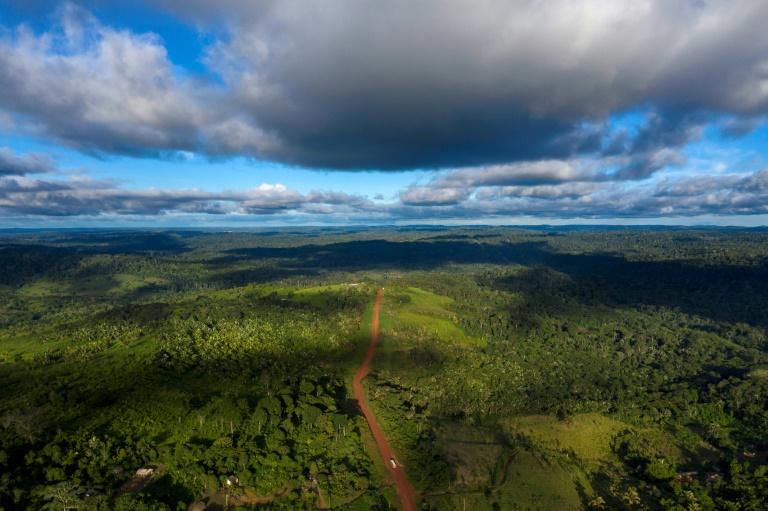 Weltweit gehen jährlich rund 8,8 Millionen Hektar Wald verloren