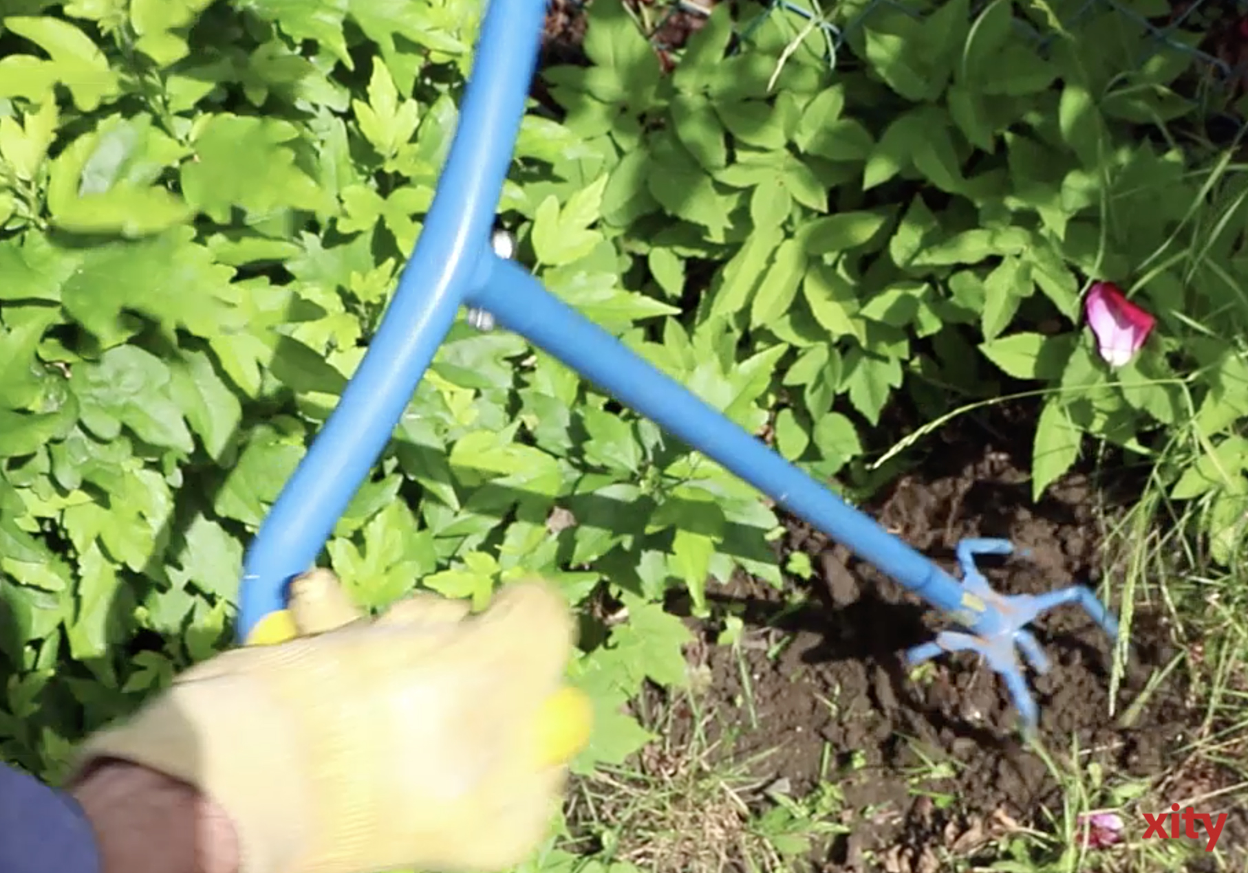 Im eigenen Garten muss hier und da noch angepackt werden (Foto: xity)