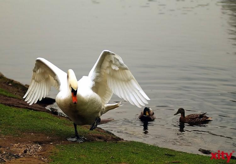 IHZ-Teich in Oberbilk wird von Schlamm und Algen befreit (Foto: xity)