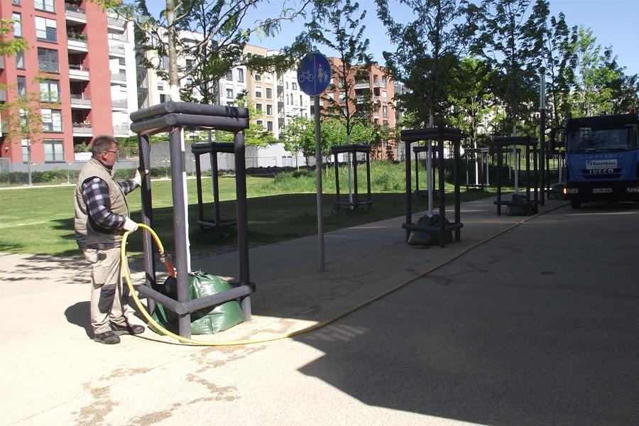 Mit Wassersäcken können Jungbäume über Zeit bewässert werden (Foto: Stadt Düsseldorf/Gartenamt)