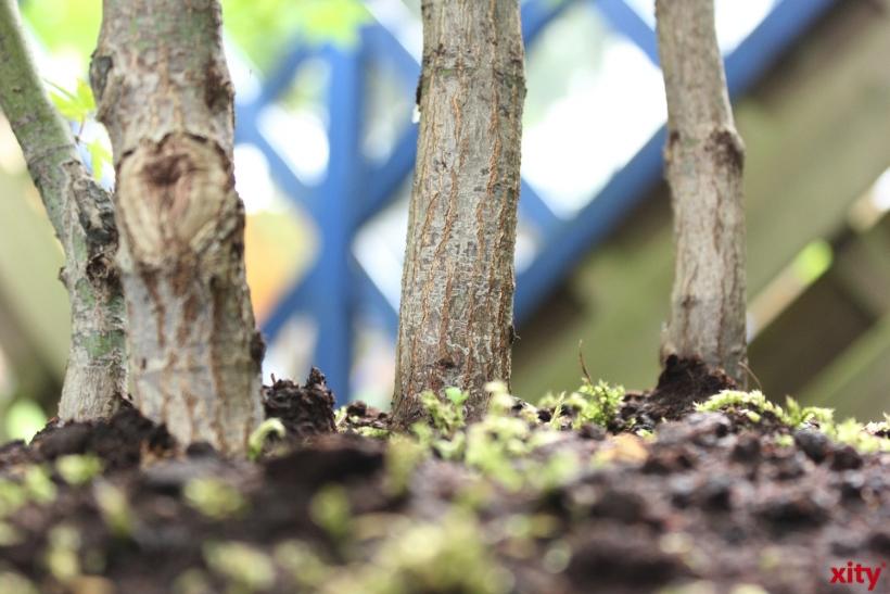 Jungbäume in Düsseldorf leiden an Wassermangel