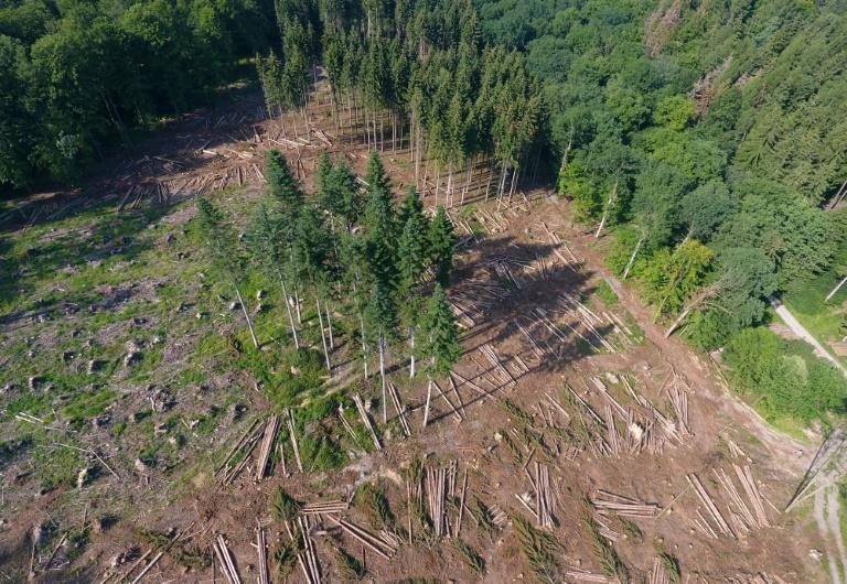 """Grüne fordern in """"Klimawaldprogramm"""" Milliardeninvestition gegen das Waldsterben (© 2019 AFP)"""