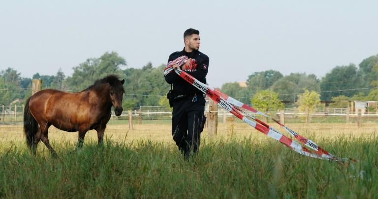 Polizisten in Hannover treiben 40 entlaufene Pferde mit Streifenwagen zusammen (© 2019 AFP)
