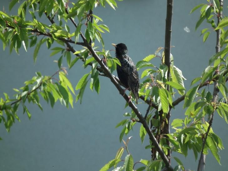 Vögel bevorzugen höher aufgestellte oder aufgehängte flache Wasserschalen mit rauem Untergrund (Foto: xity)