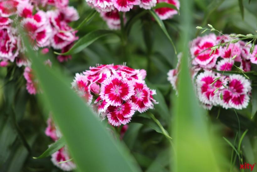 """In einer Nacht- und Nebelaktion: Unerwünschte """"Erntehelfer"""" plündern mehrere Blumenfelder(Foto: xity)"""