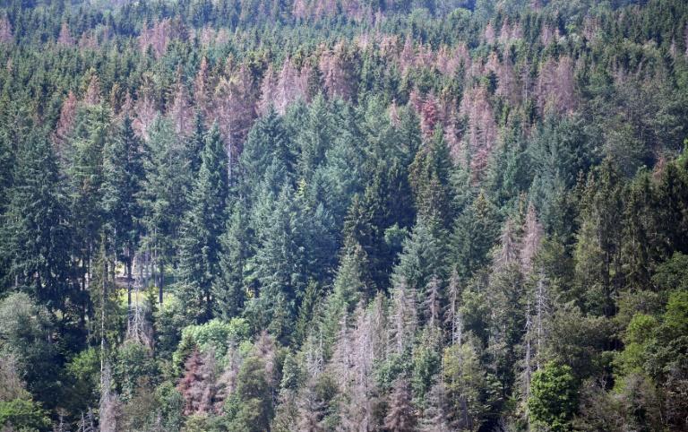 Klöckner berät mit Verbänden über Wiederaufforstung von Wäldern