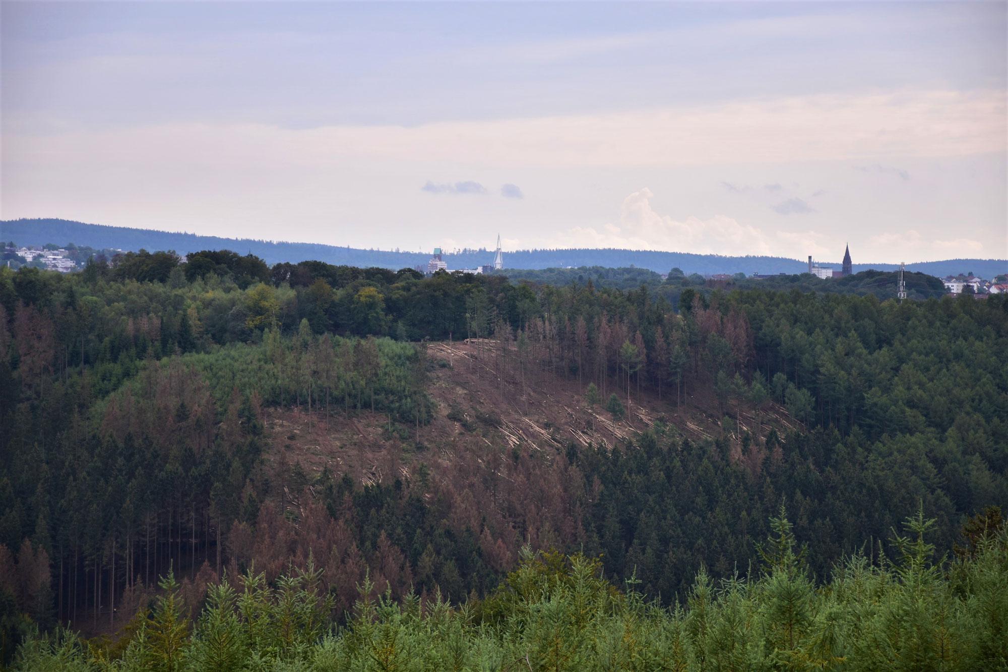 Das Baumsterben im Märkischen Kreis greift um sich. (Foto: Alena Scharrenbroich/Wald und Holz)