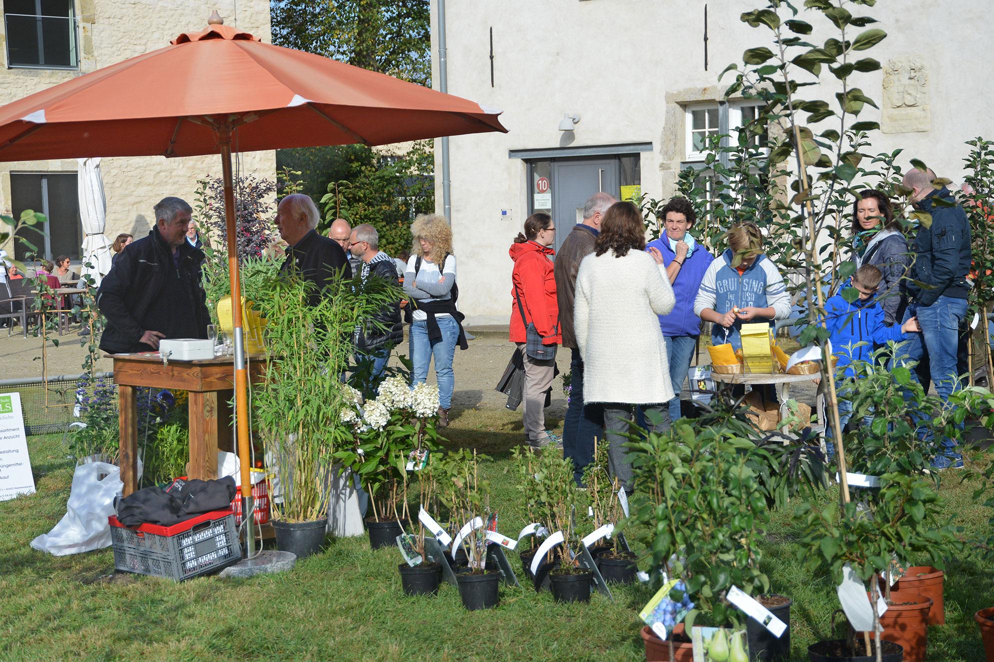 Kreis Steinfurt lädt zu Köstlichkeiten und Aktionen rund um den Apfel ein (Foto: Dorothea Boeing)