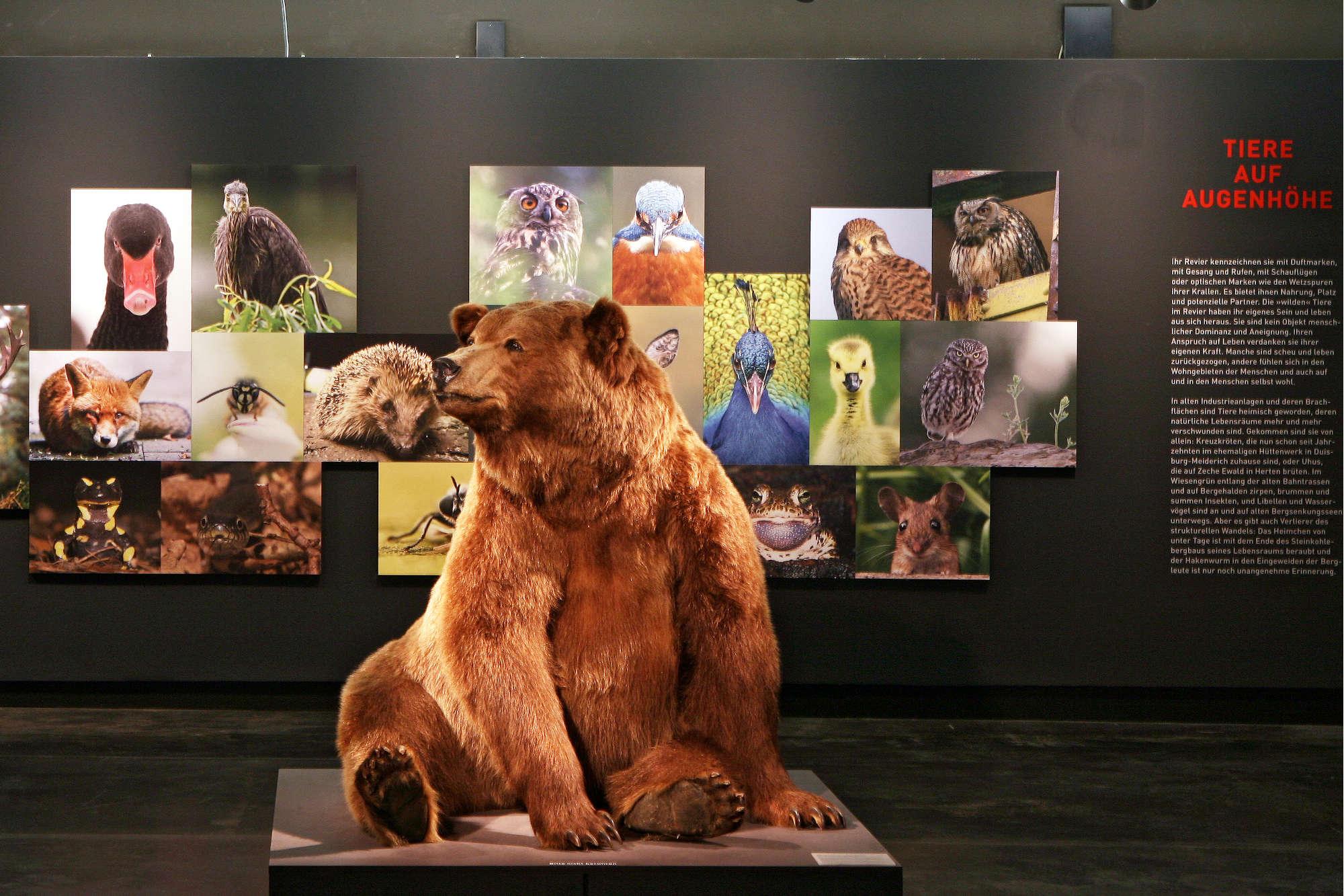 """Galerieausstellung """"Mensch und Tier im Revier"""""""