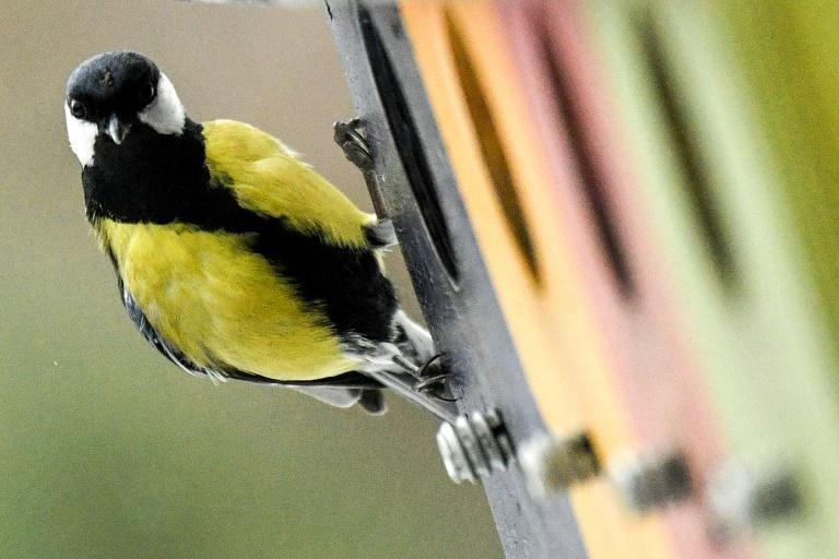 Vogelschwund auf Wiese und Acker hält an - Im Wald hingegen wachsen die Bestände (© 2020 AFP)