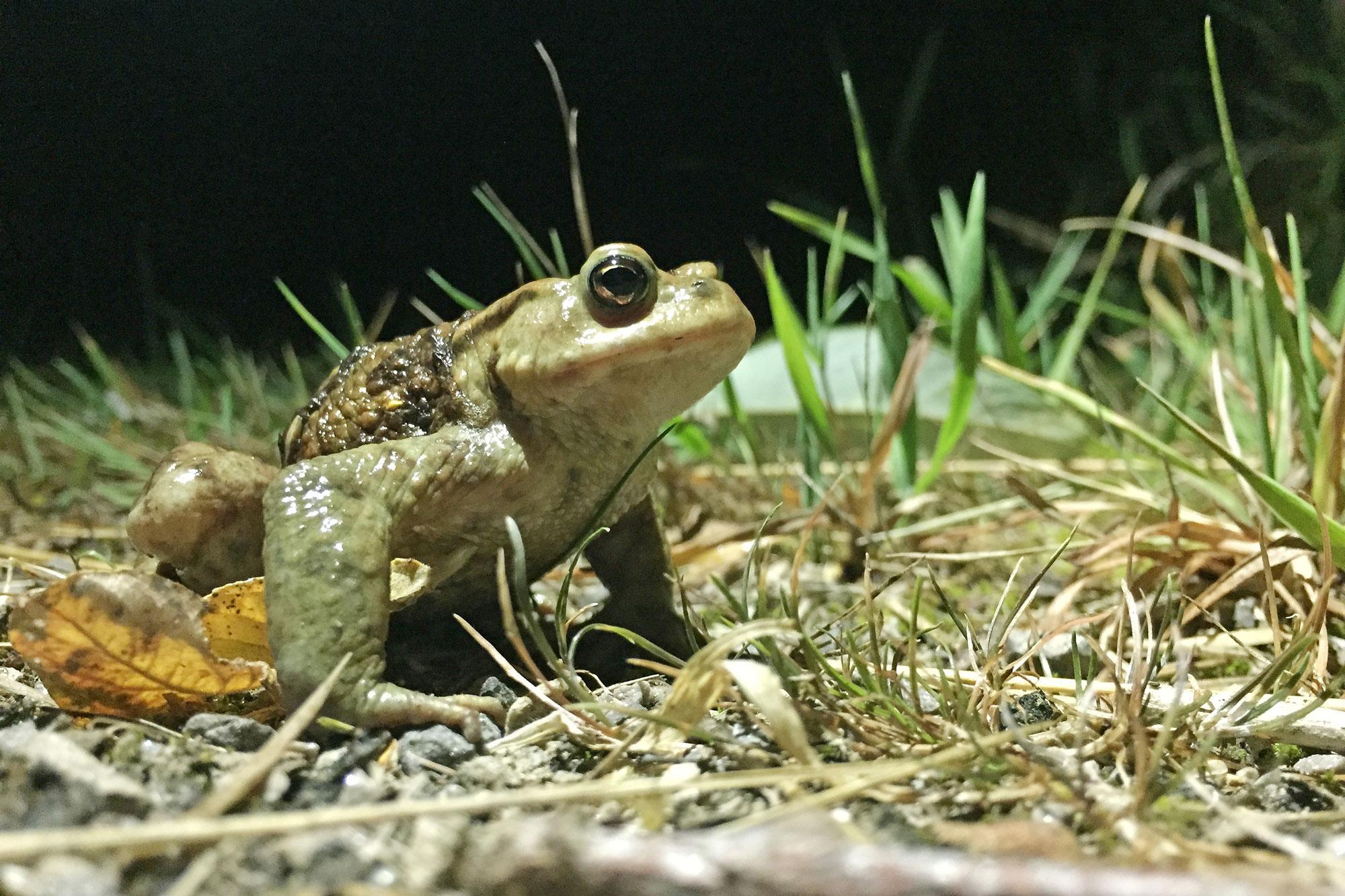 Amphibien wandern wieder. (Foto: Stadt Bochum)