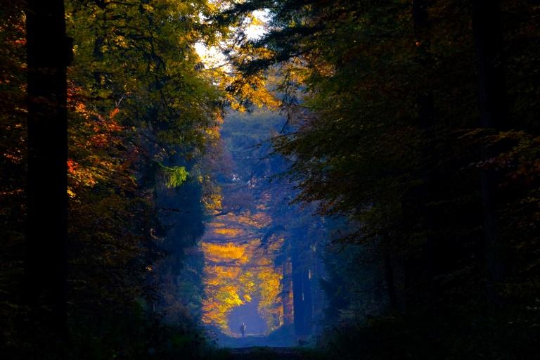 Schäden in deutschen Wäldern deutlich größer als bislang angenommen