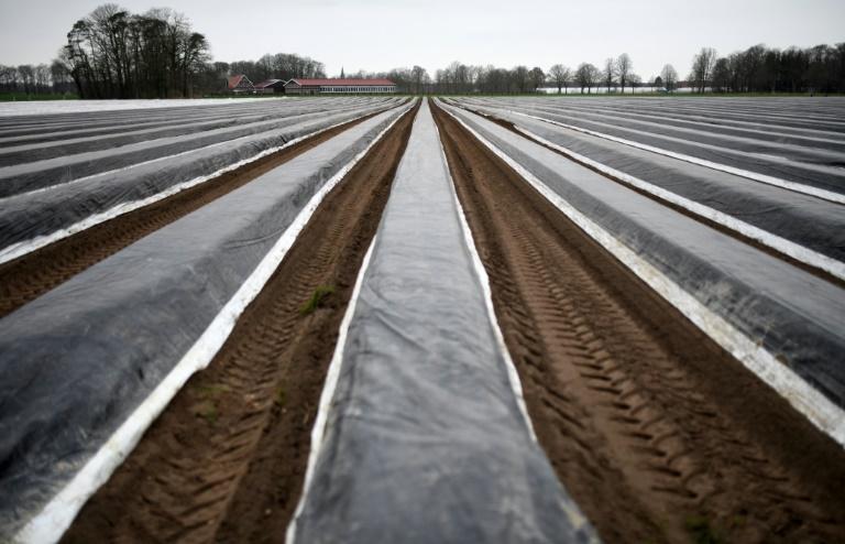 Bauern befürchten wegen Corona-Krise Mangel an Saisonarbeitern