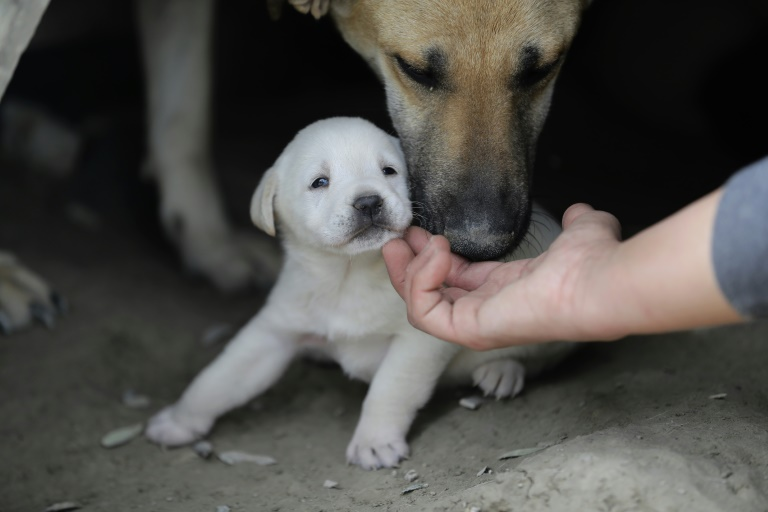 Berliner Virologen bieten Corona-Test für Hunde und Katzen an (© 2020 AFP)