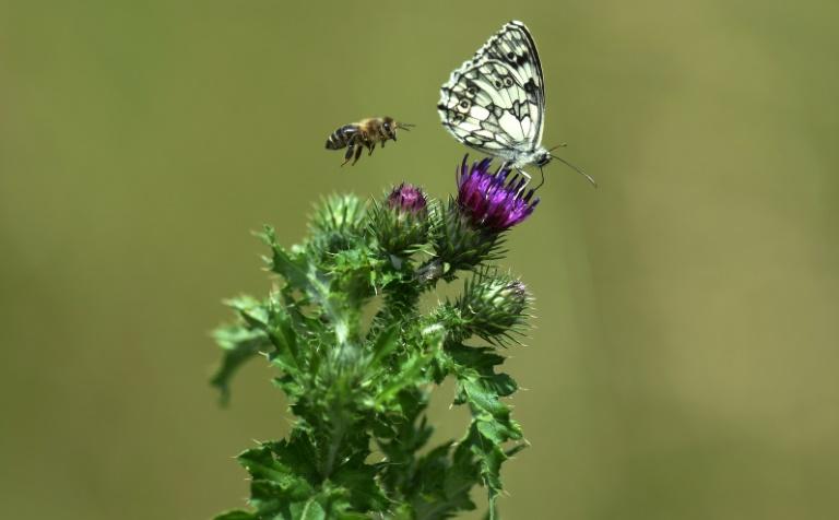 Vielfalt von Schmetterlingen soll auch in Städten gefördert werden
