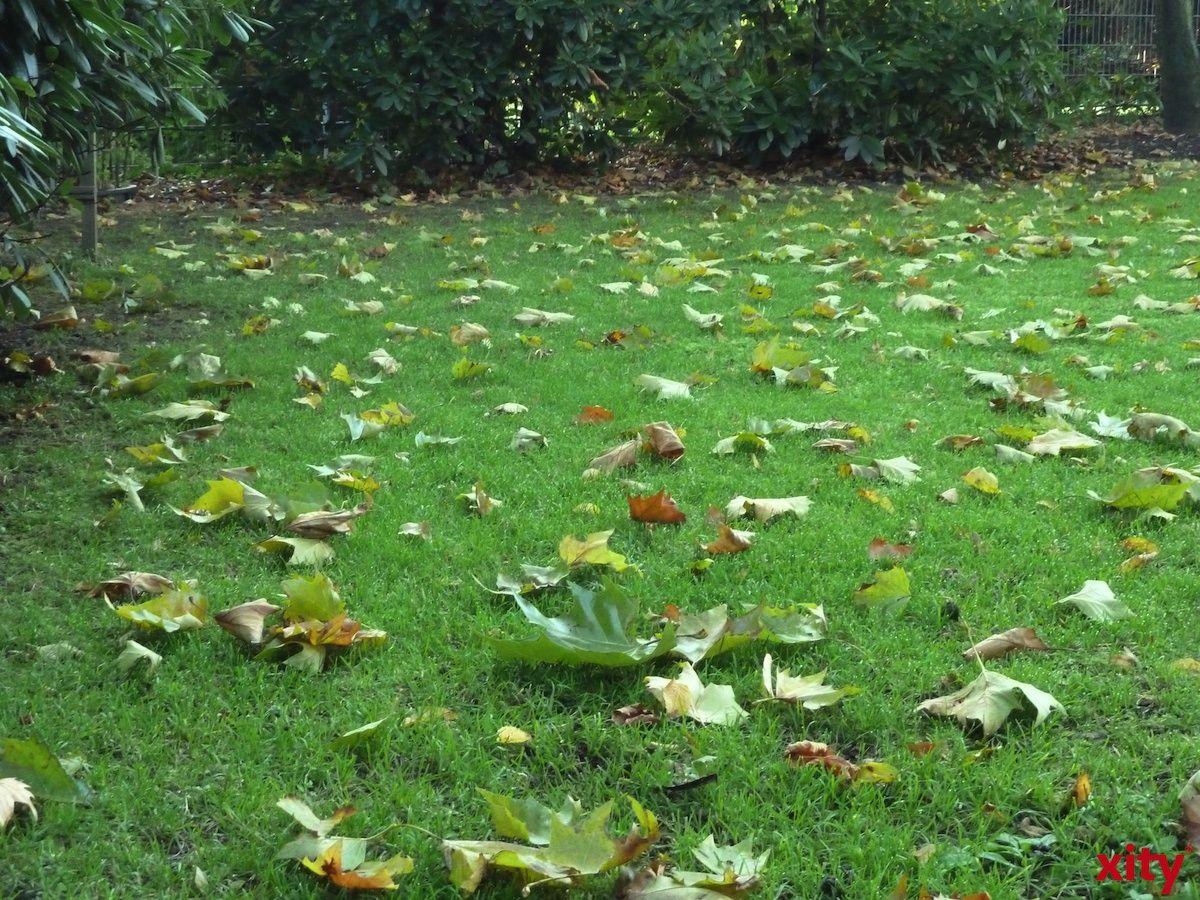 Zusätzliche Biotonnen für Herbstlaub können ausgeliehen werden. (Foto: xity)