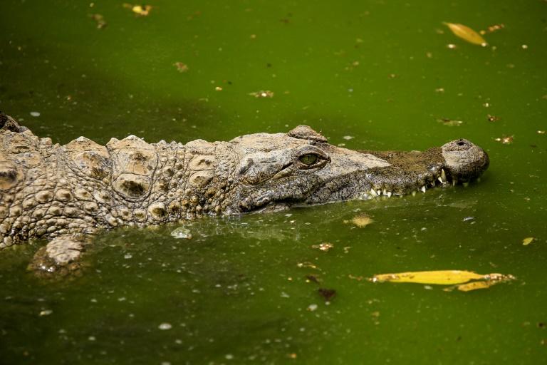 Behörden beenden Suche nach angeblichem Krokodil in der Unstrut (© 2020 AFP)