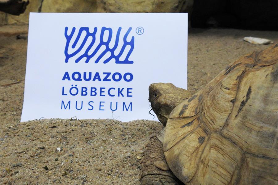 Aquazoo Löbbecke Museum lässt Wort-Bild-Marke offiziell eintragen (Foto: Aquazoo Löbbecke Museum/Philipp-Martin Schroeder)