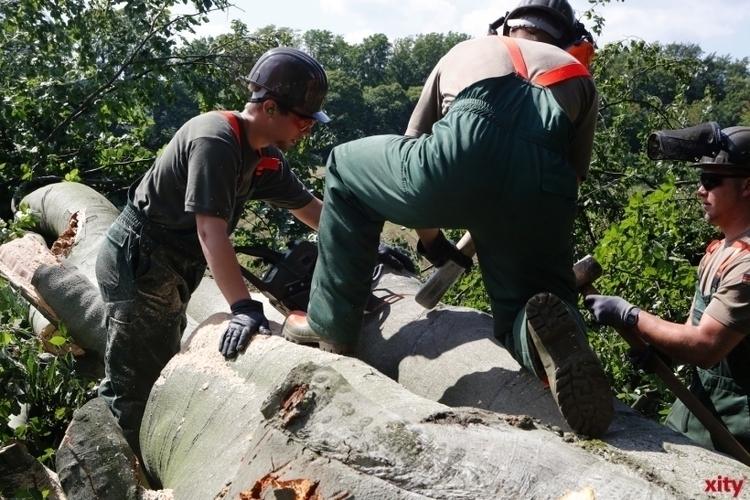 Baumfällarbeiten auf dem Lohauser Deich (Foto: xity)