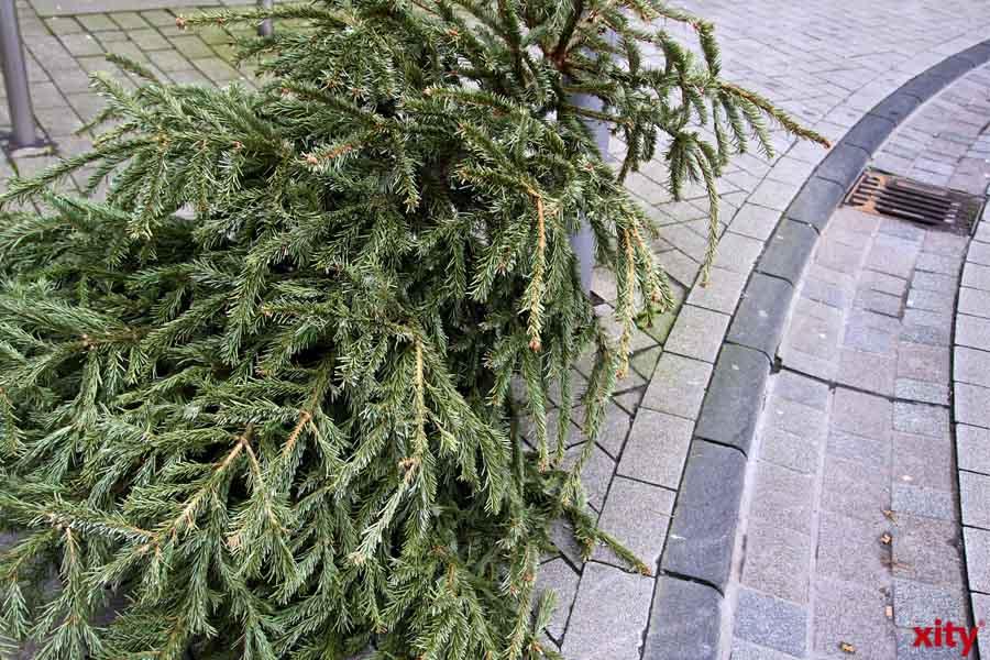 Düsseldorf: Seit heute werden Weihnachtsbäume abgeholt (Foto: xity)