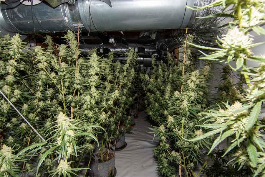 Düsseldorf: Cannabisplantage in Wohnhaus entdeckt (Foto: Polizei Düsseldorf))