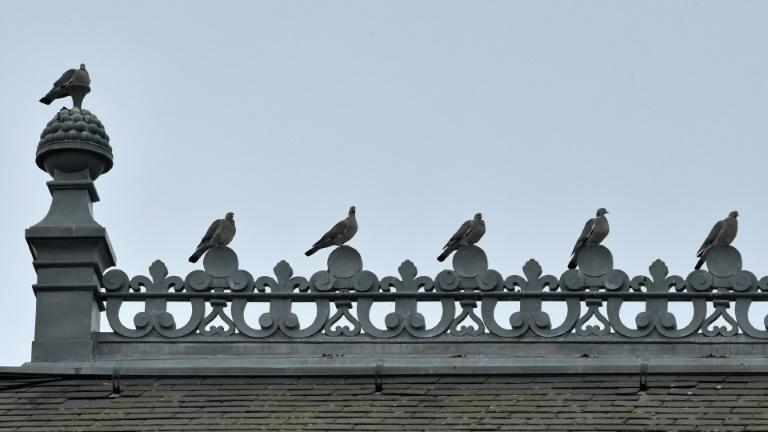 Zu häufiges Taubenfüttern kann zur Androhung von Ordnungsgeld führen (© 2021 AFP)