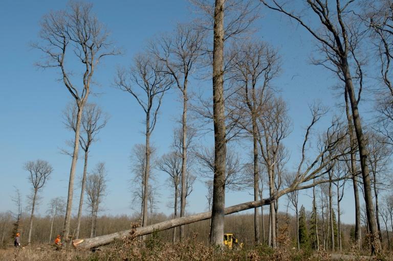 Forstwirtschaft: 13 Milliarden Euro Schaden in drei Jahren durch Extremwetter (© 2021 AFP)
