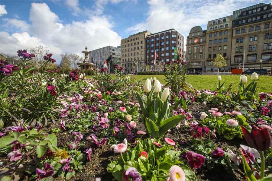 Frühlingsblumen auf dem Corneliusplatz (Foto: Stadt)