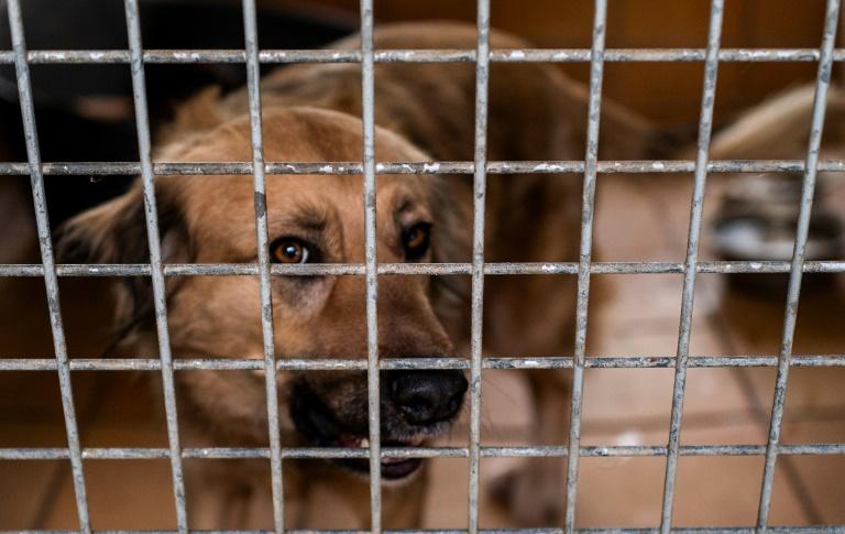 Umweltministerium greift Tierheimen finanziell unter die Arme (© 2021 AFP)