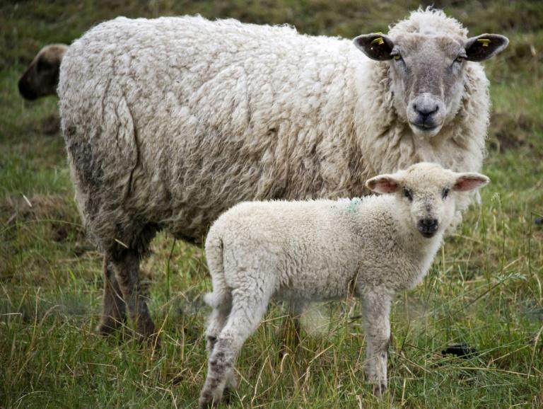 Besonders brutaler Fall von Tierquälerei in Baden-Württemberg (© 2021 AFP)