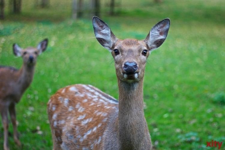 Testpflicht für Wildpark-Besucher in Düsseldorf (Foto: xity)