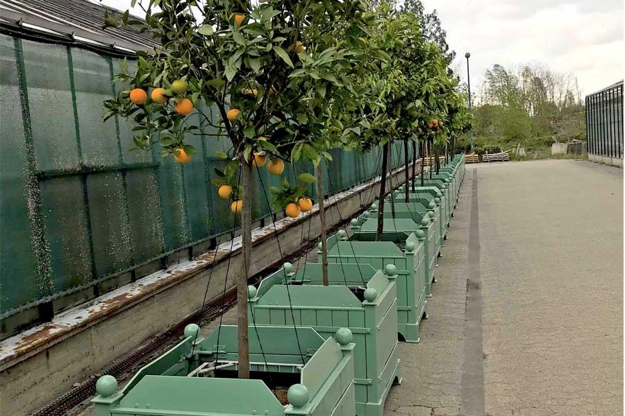 Gartenamt bringt die Kübelpflanzen aus dem Winterquartier in die Parks (Foto: Stadt Düsseldorf/Gartenamt)