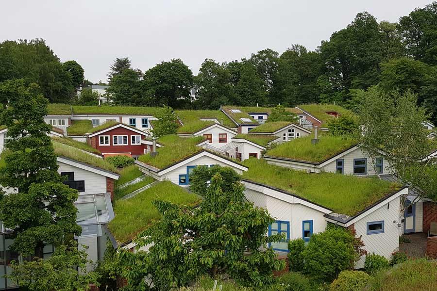 2019 gewannen die Gründächer der ökologischen Siedlung Düsseldorf-Unterbach den Umweltpreis (Foto: Ludger Gigengack)