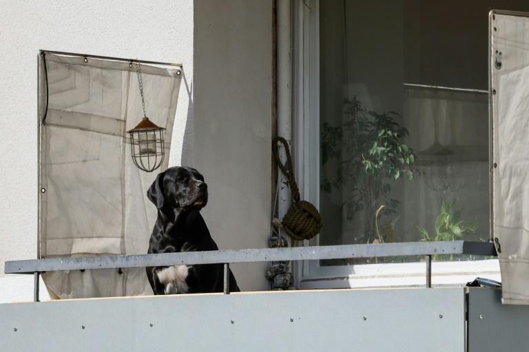 Stiftung Warentest: Trockenfutter für ältere Hunde oft ungeeignet (© 2021 AFP)
