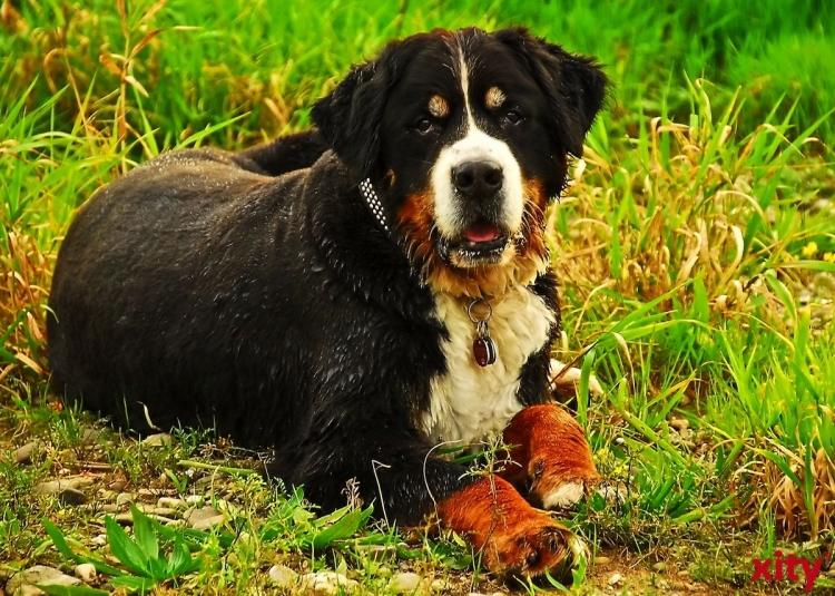 Tiere aus dem Ausland mit nach Hause nehmen: Auf gesetzliche Bestimmungen achten (Foto: xity)