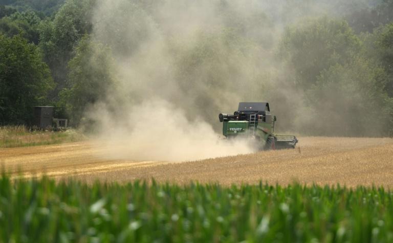 Experten sehen in Landwirtschaft großes Potenzial zur Emissionssenkung (© 2021 AFP)