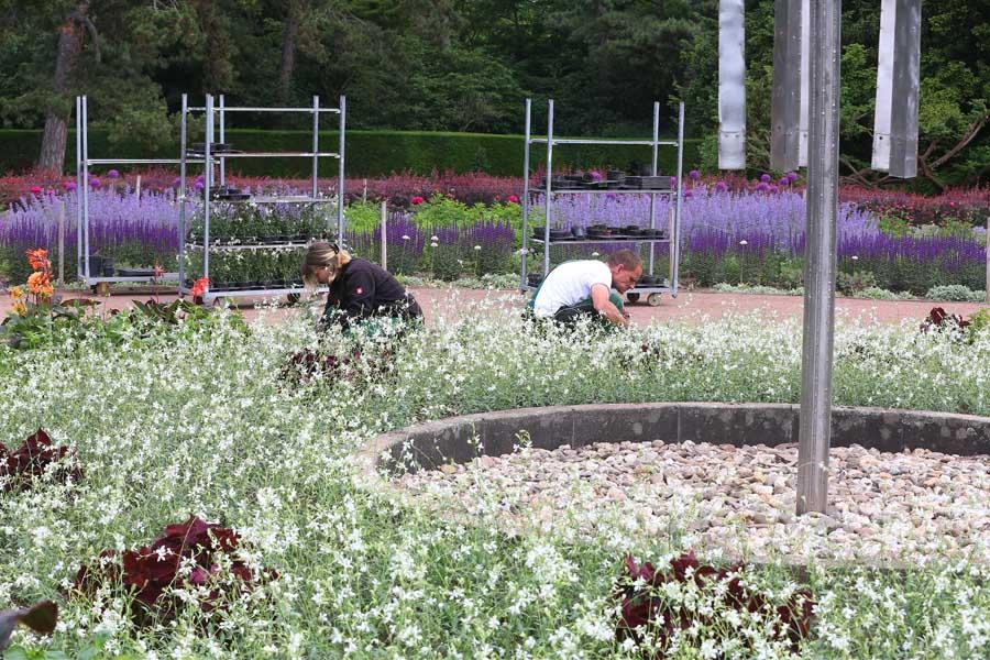Mehr als 100.000 Sommerblumen zieren die Grünflächen und Parks, Friedhöfe und Blumenkübel (Foto: Stadt Düsseldorf/David Young)