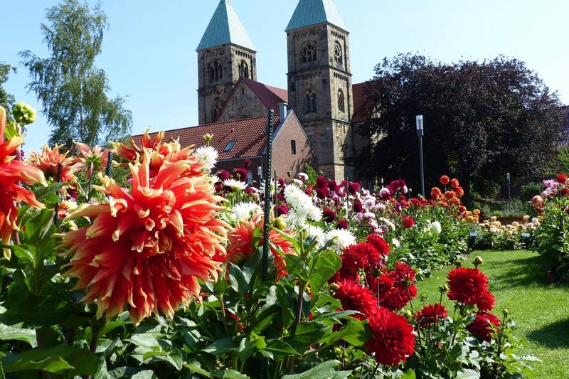 Dahliengarten Legden (Foto: Kreis Borken)