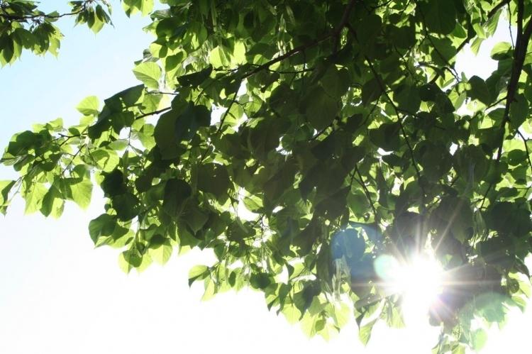 Sommersonnenwende über den Dächern Halles erlaben (Foto: xity)