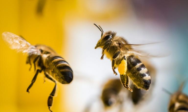 Bundestag beschließt besseren Schutz für Insekten (© 2021 AFP)