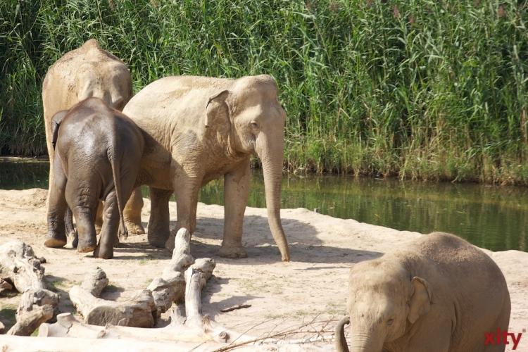 Zusätzliche Unterstützung des Landes für die nordrhein-westfälischen Zoos und Tiergärten (Foto: xity)