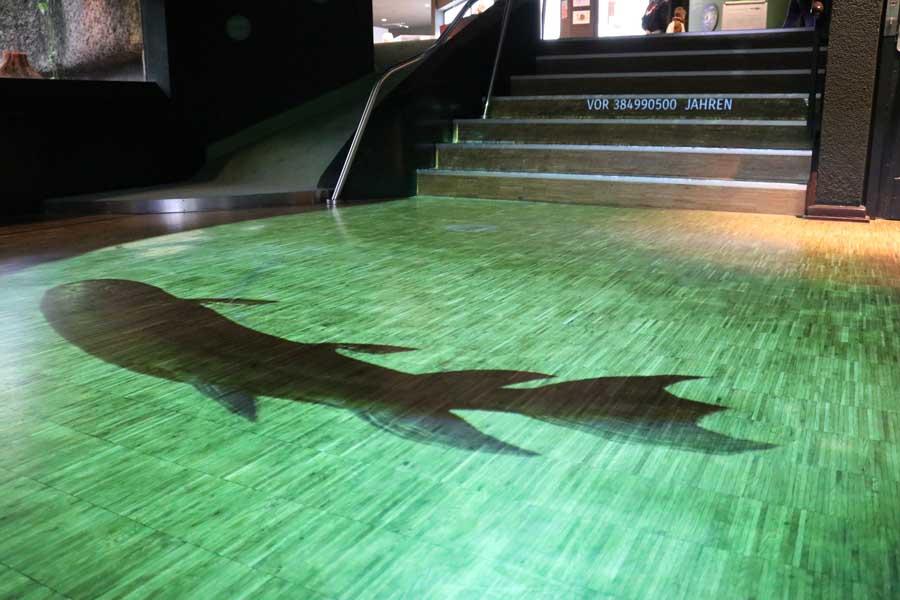 Seit einigen Wochen bewegen sich Urzeitwesen inmitten der Ausstellung des Aquazoo (Foto: Stadt Düsseldorf/Aquazoo Löbbecke Museum)