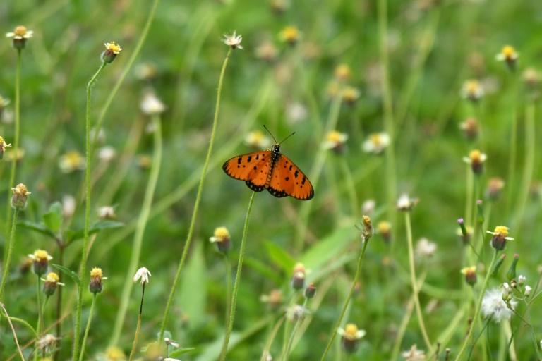 Hamburger Zoll stoppt Schaukästen mit geschützten tropischen Schmetterlingen (© 2021 AFP)
