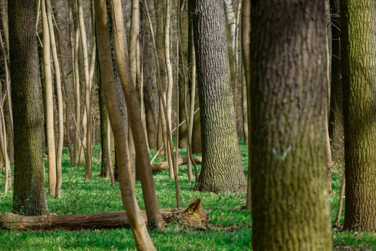 Bund unterstützt Forstsektor wegen Waldschäden mit anderthalb Milliarden Euro (© 2021 AFP)