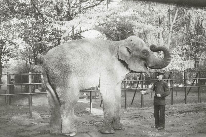 Zoologischer Garten, Elefantengehege um 1910. (Foto: Stadtarchiv Düsseldorf)